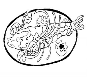 sea doo coloring pages 28 best seafood coloring pages for kids updated 2018 pages coloring sea doo