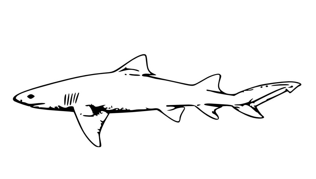 shark coloring pictures coloring pages shark coloring pages free and printable coloring pictures shark