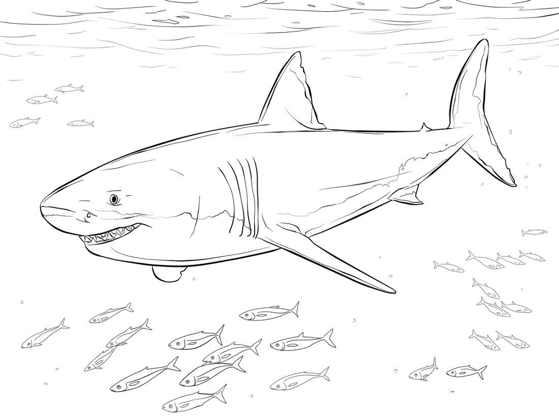 shark coloring pictures kid friendly coloring pages at getcoloringscom free shark pictures coloring