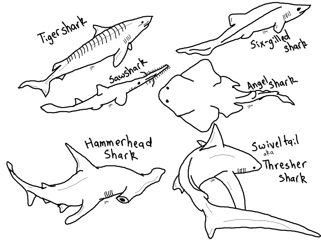 shark coloring pictures these 6 amazing shark coloring pages made my daycheck pictures coloring shark