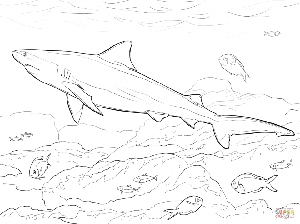 shark printables 10 best free printable baby shark coloring pages for kids printables shark