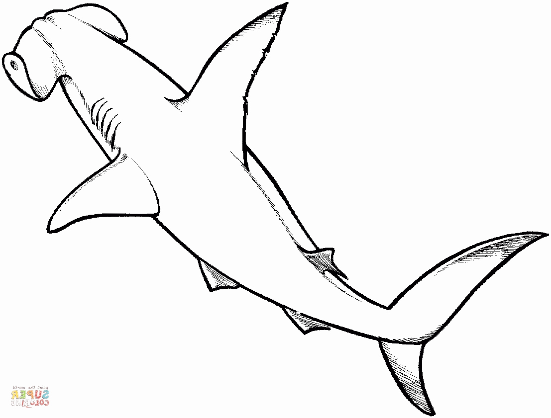 shark printables get this shark coloring pages for adults 86941 shark printables