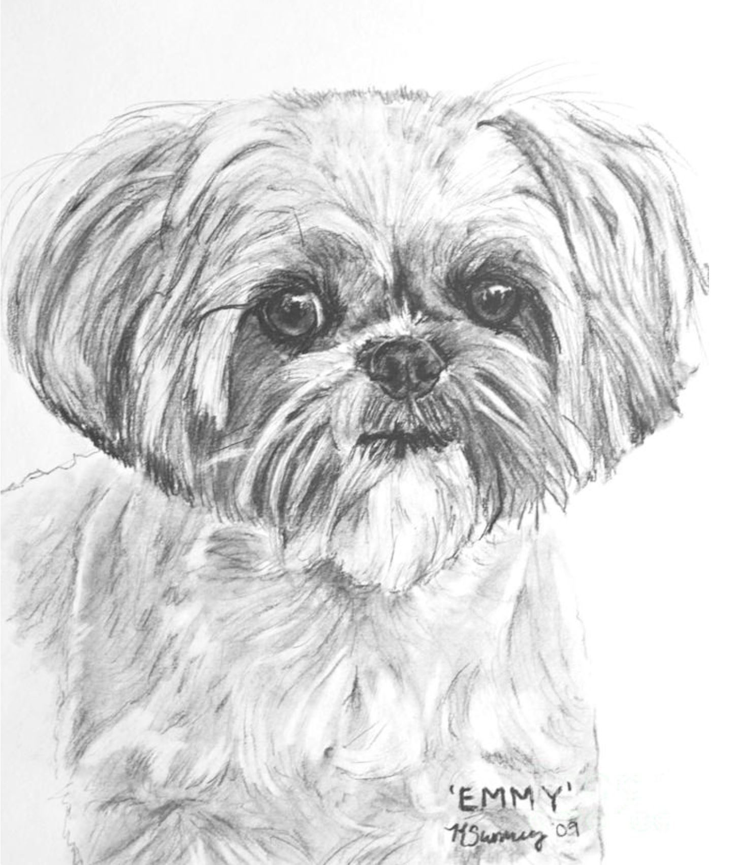shih tzu pictures to print pin by dog breeds on shih tzu with images dog art to tzu pictures print shih