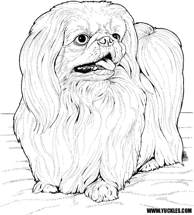 shih tzu pictures to print pin em coloring shih pictures tzu print to