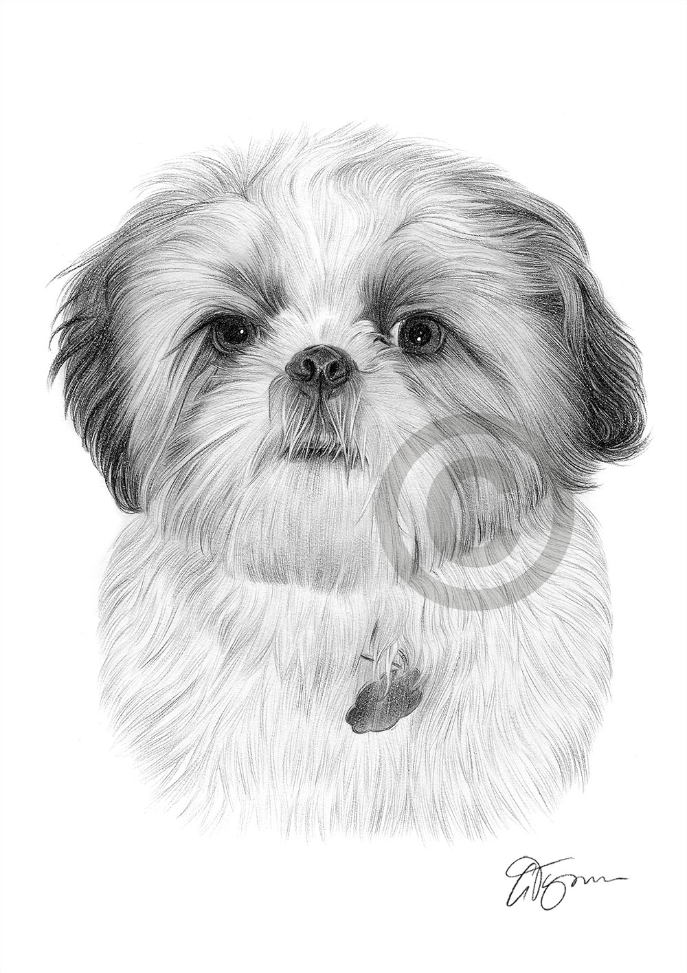 shih tzu pictures to print pin on products shih tzu print pictures to