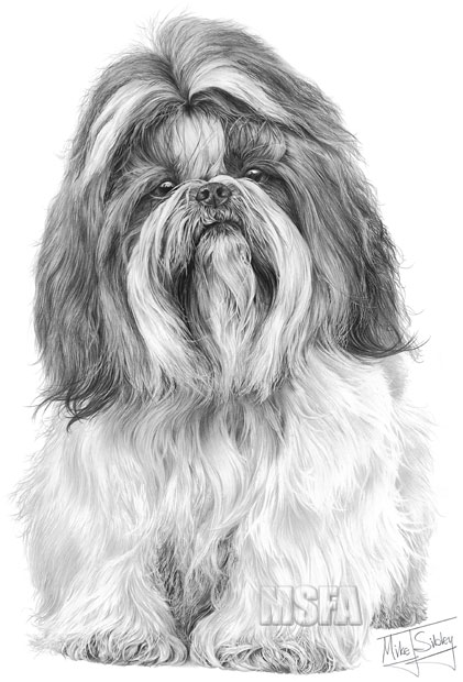 shih tzu pictures to print shi tzu d automnne coloring pages printable free shih to pictures print tzu