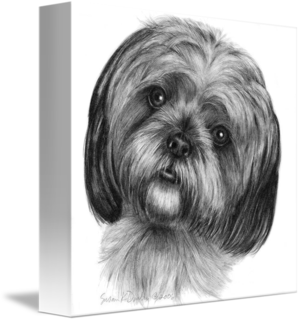 shih tzu pictures to print shih tzu dog art a4 size signed pencil drawing artwork pictures print tzu shih to