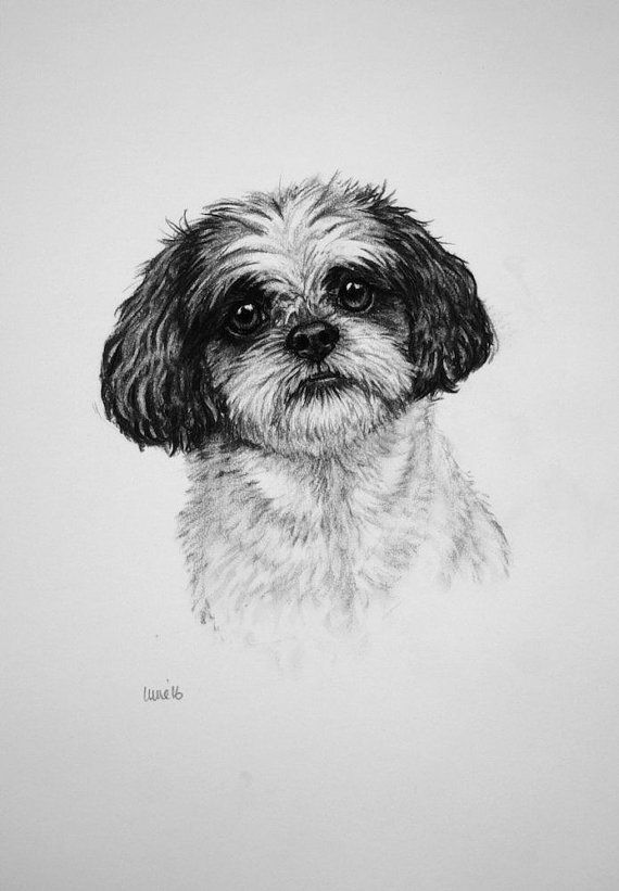 shih tzu pictures to print shih tzu dog art print dog print dog lover gift toy dog tzu to shih print pictures
