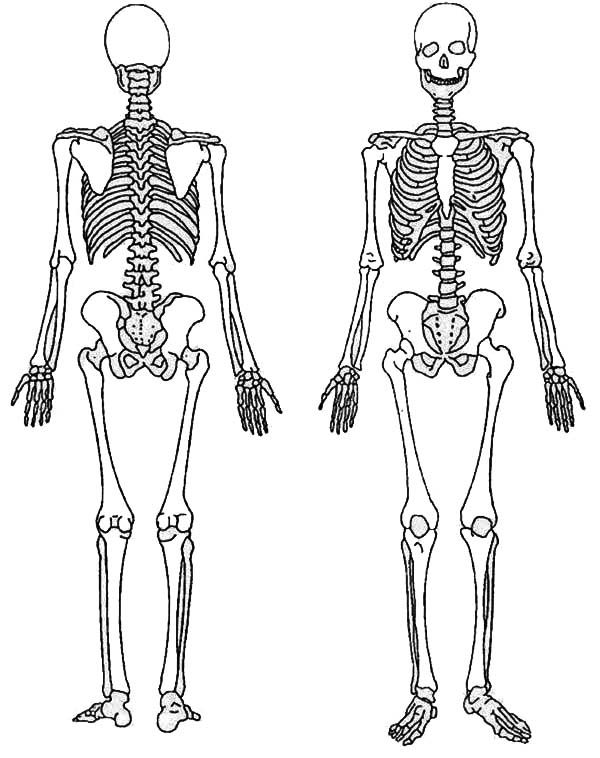 skeletal system coloring page anatomy coloring book pages free printable coloring pages coloring skeletal page system