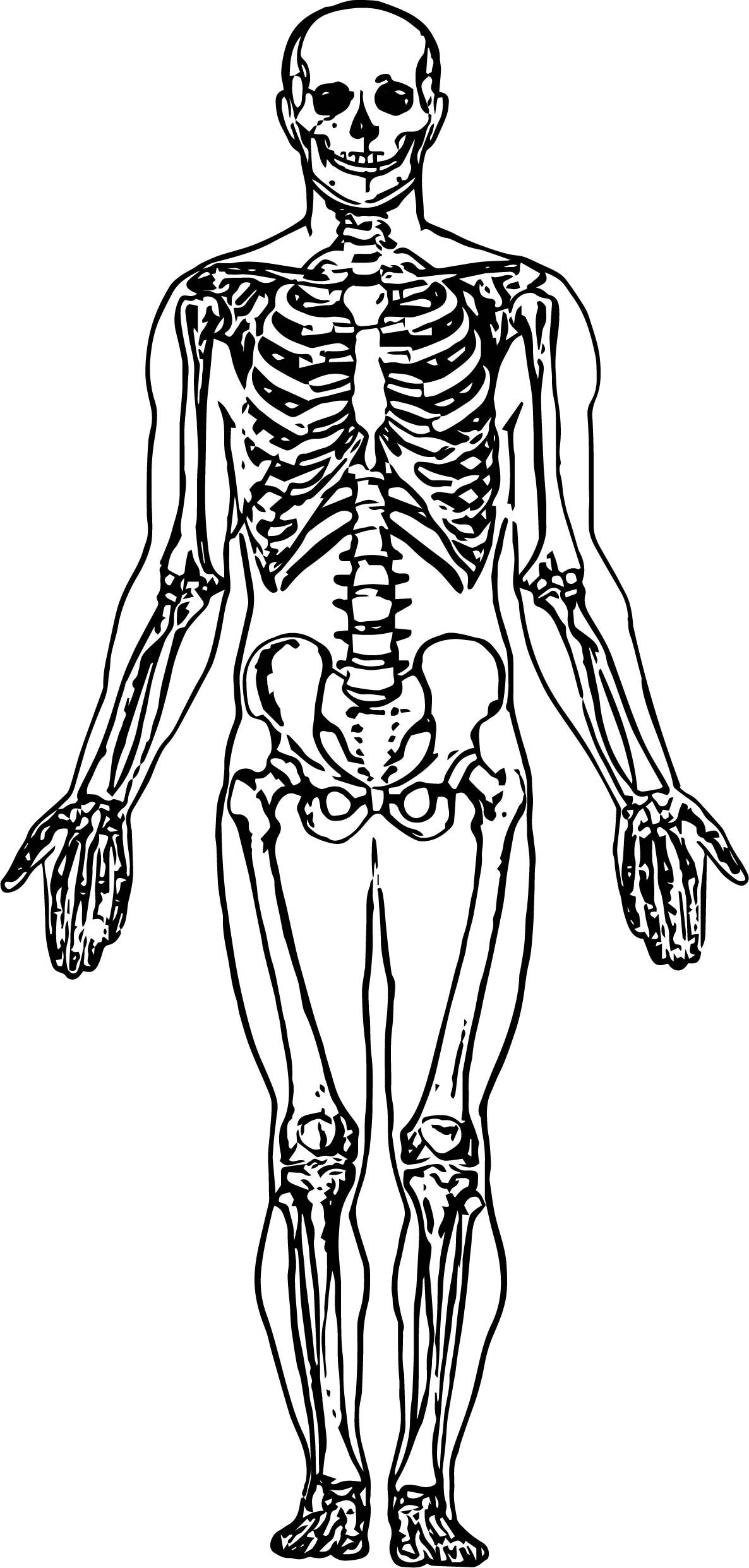 skeletal system coloring page anatomy skeleton drawing at getdrawings free download skeletal page coloring system