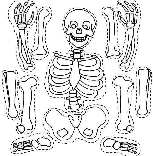 skeletal system coloring page coloring pages september 2011 page skeletal coloring system