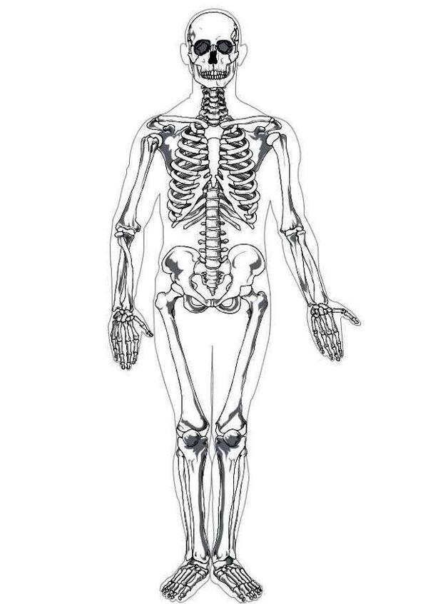 skeletal system coloring page human body skeleton clipart system skeletal page coloring