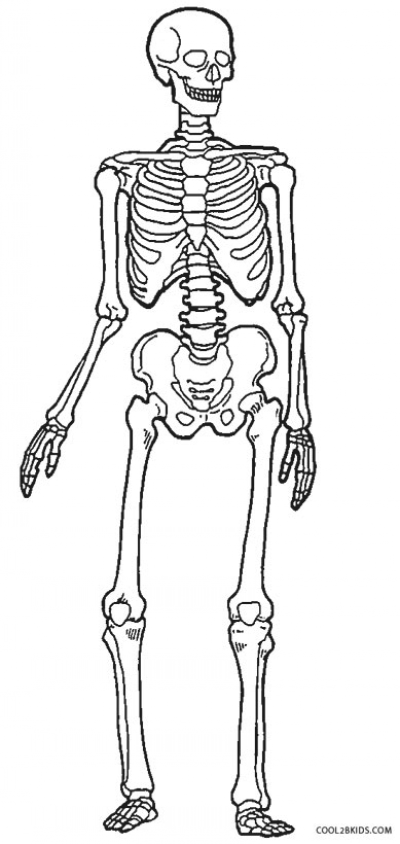 skeletal system coloring page human bones drawing at getdrawings free download skeletal system coloring page