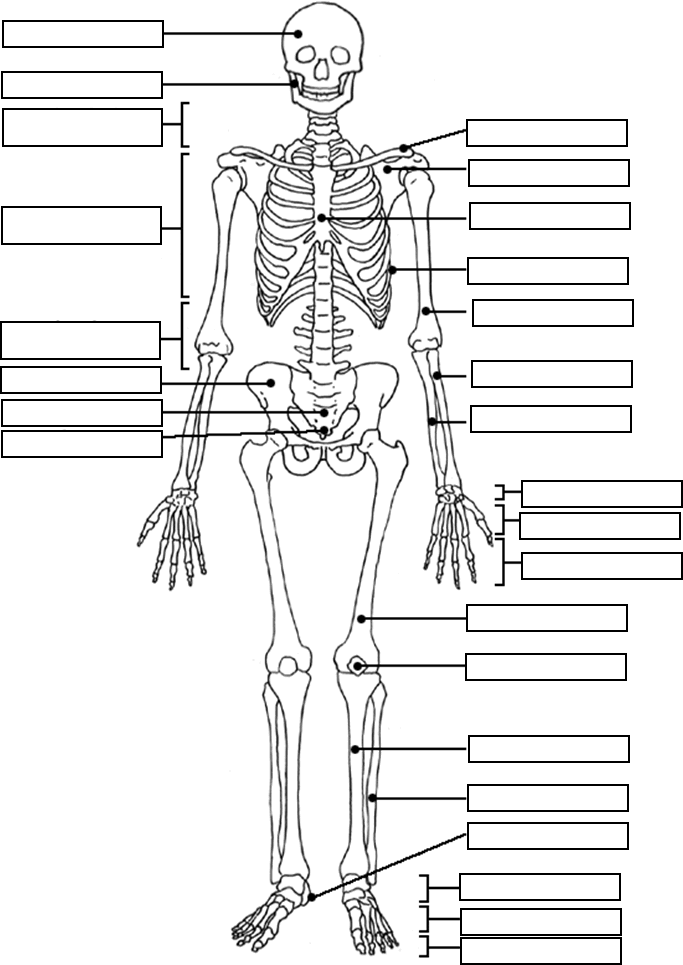 skeletal system coloring page printable skeleton coloring pages for kids cool2bkids page skeletal system coloring