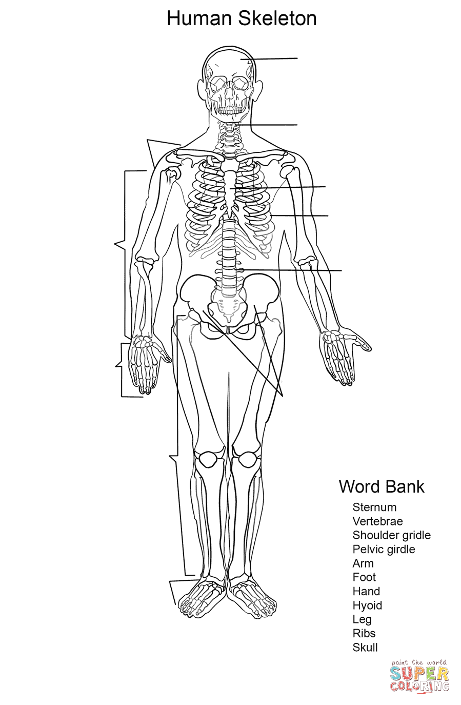 skeletal system coloring page skeletal system drawing at getdrawings free download page coloring skeletal system