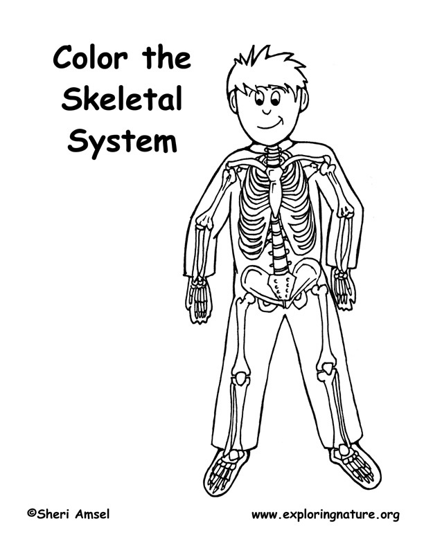 skeletal system coloring page skeleton fill in the names anatomy and physiology human coloring system skeletal page