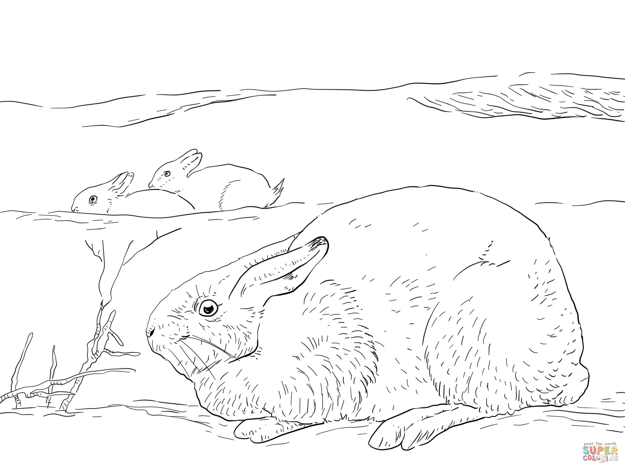 snowshoe hare coloring page arctic hares coloring page free printable coloring pages page snowshoe coloring hare