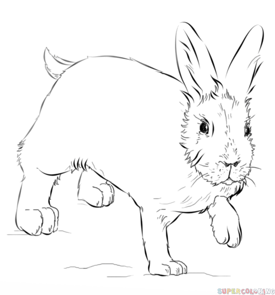 snowshoe hare coloring page how to draw a showshoe hare step by step drawing tutorials hare snowshoe page coloring