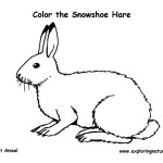 snowshoe hare coloring page mammals coloring nature coloring page hare snowshoe