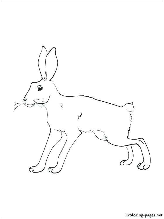 snowshoe hare coloring page snowshoe coloring pages at getcoloringscom free hare coloring page snowshoe