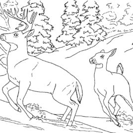 snowshoe hare coloring page snowshoe coloring pages at getcoloringscom free hare page coloring snowshoe