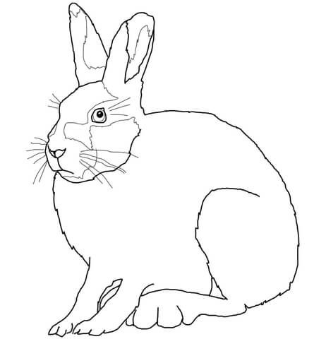 snowshoe hare coloring page snowshoe hare coloring pages free printable coloring sheets page coloring hare snowshoe