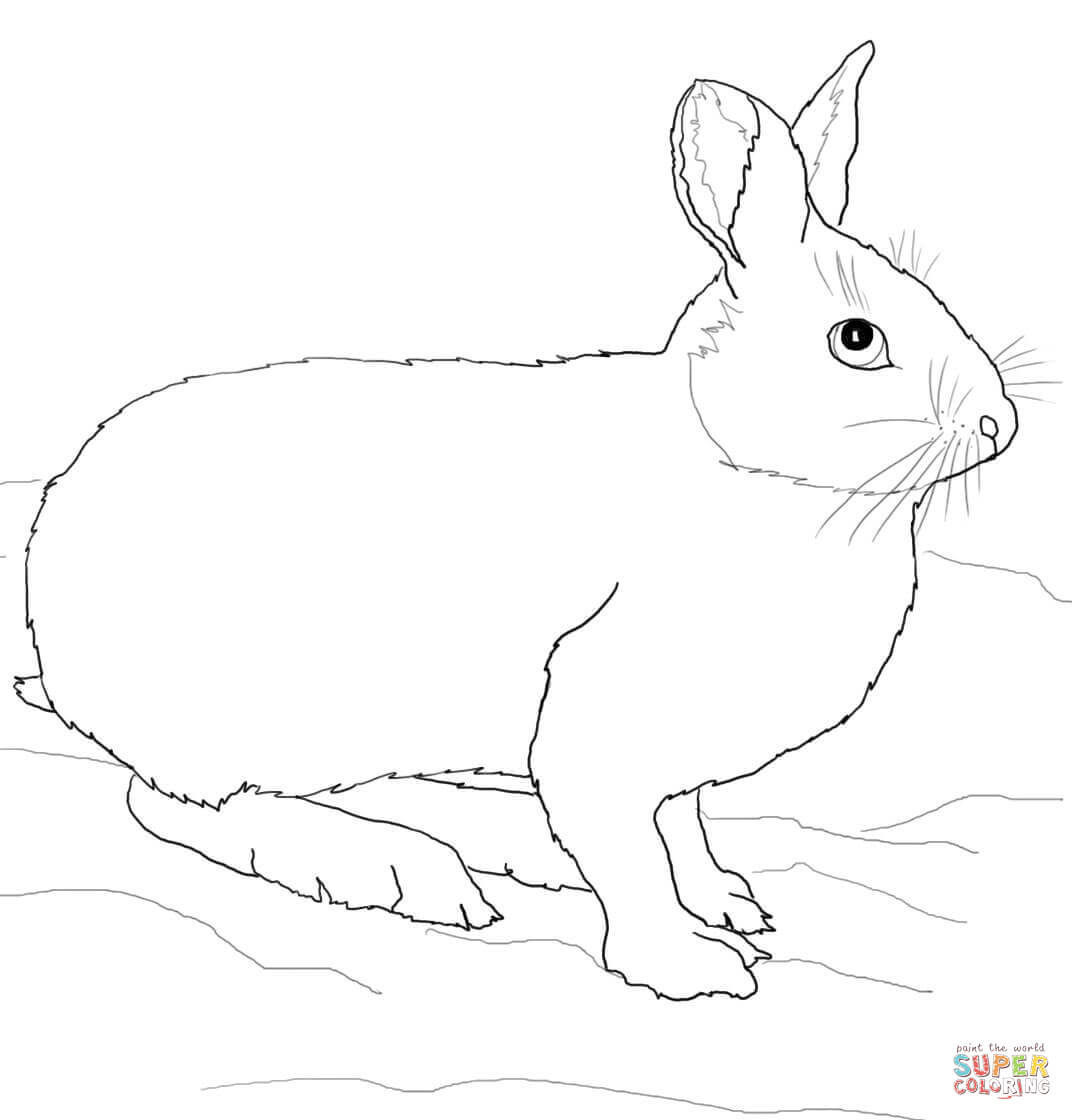 snowshoe hare coloring page snowshoe hare coloring pages free printable coloring sheets page snowshoe hare coloring