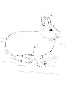 snowshoe hare coloring page snowshoe hare eating seeds coloring nature page hare snowshoe coloring