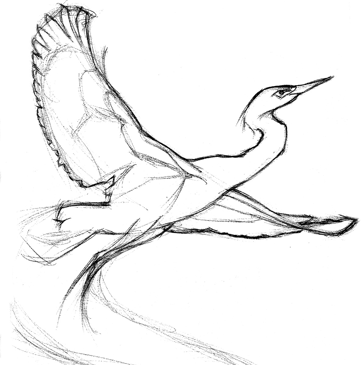 snowy egret drawing egrets coloring pages free coloring pages drawing egret snowy