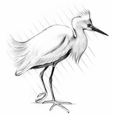 snowy egret drawing search results for snowy owl learn how to draw animals drawing snowy egret