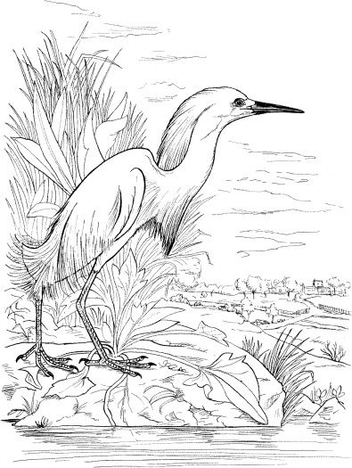 snowy egret drawing silhouette of snowy egret stock vector illustration of drawing egret snowy