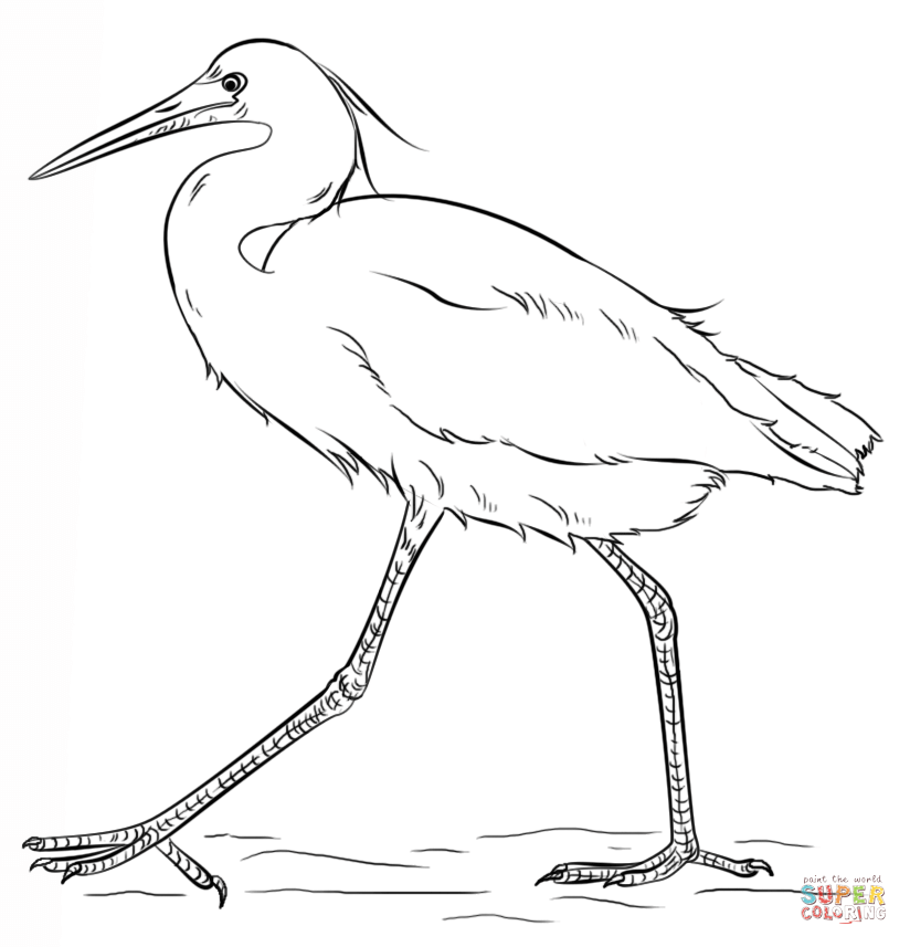 snowy egret drawing snowy egret coloring pages snowy egret drawing