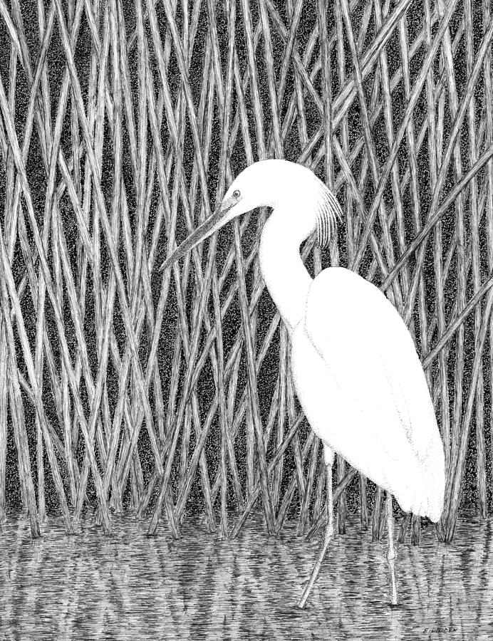 snowy egret drawing this vertical pencil drawing shows snowy stock snowy drawing egret