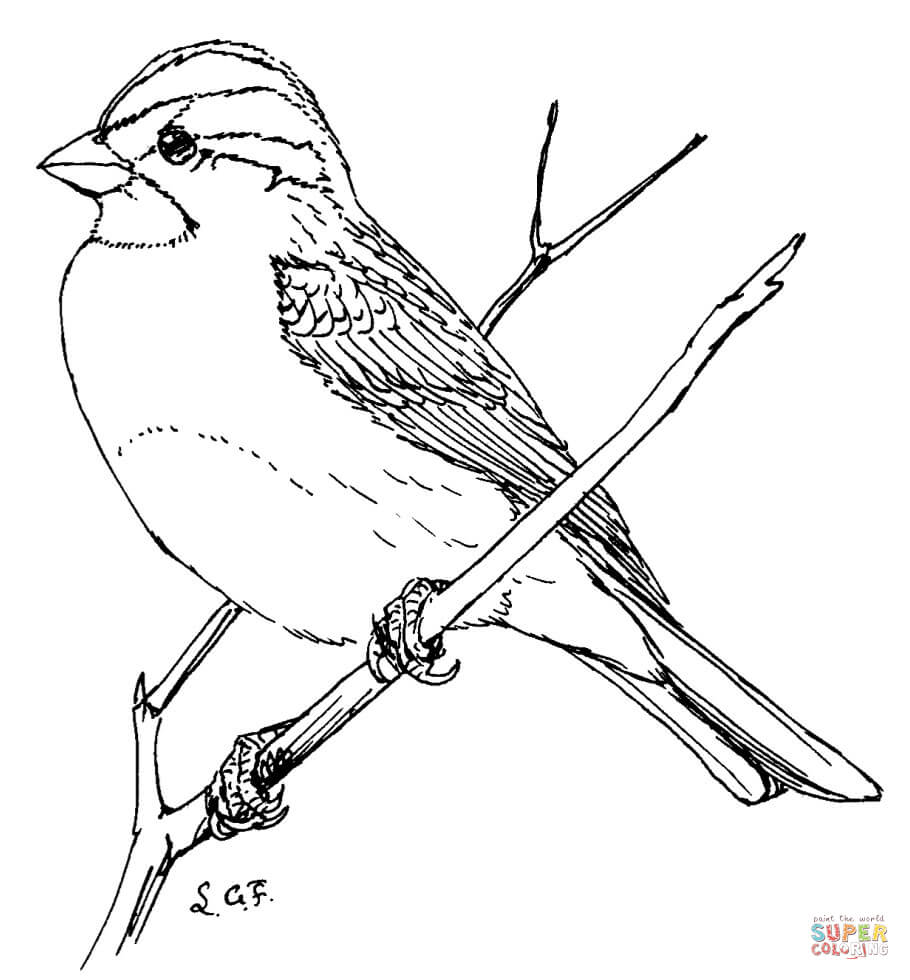 sparrow coloring pages download sparrow coloring for free designlooter 2020 pages sparrow coloring
