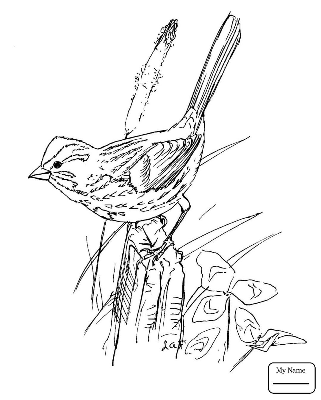sparrow coloring pages house sparrow page coloring pages sparrow coloring pages