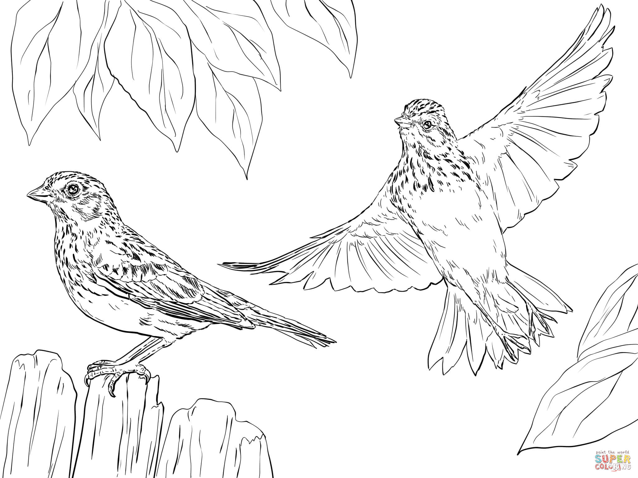 sparrow coloring pages simple sparrow drawing at getdrawings free download sparrow coloring pages