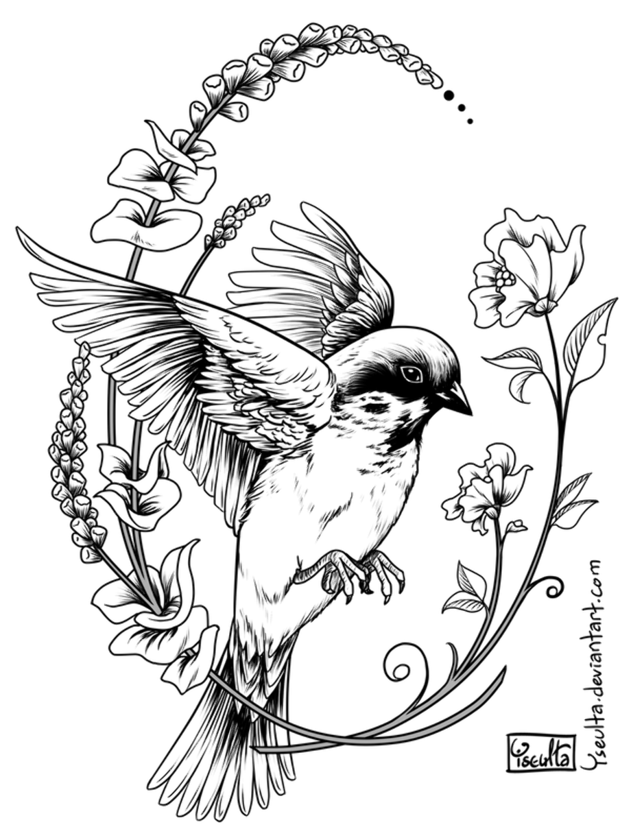 sparrow coloring pages sparrow coloring page free printable coloring pages pages coloring sparrow
