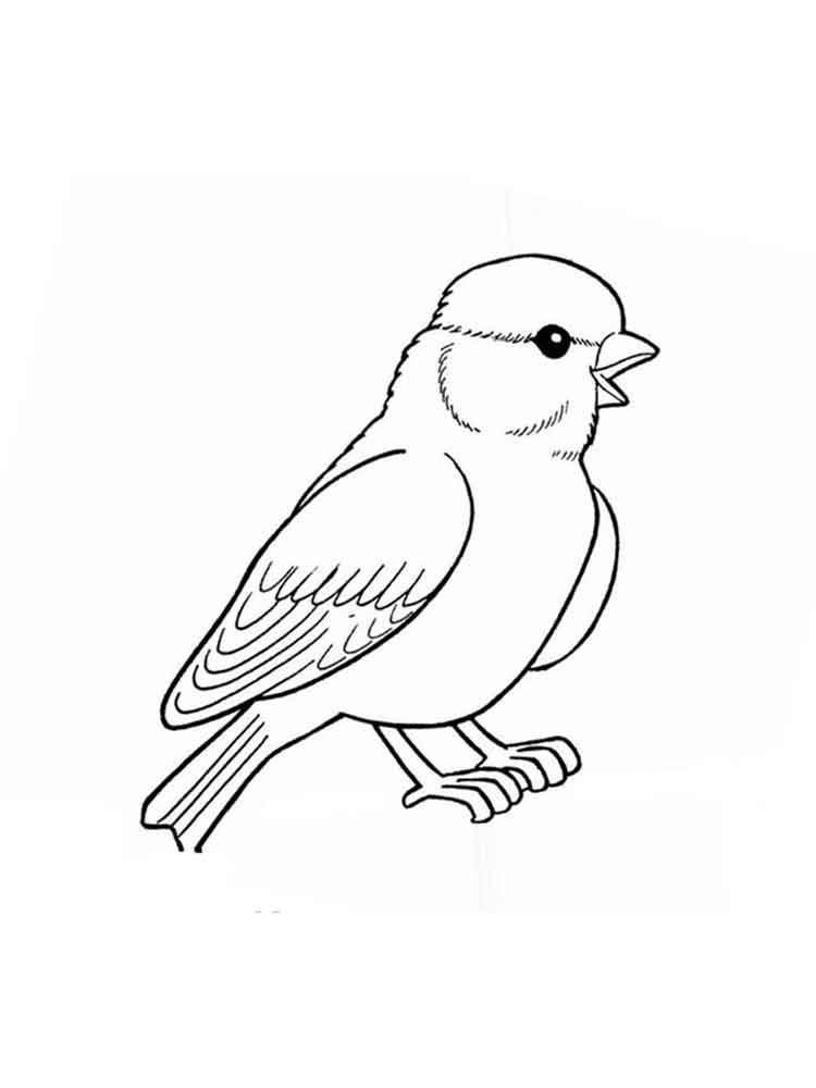 sparrow coloring pages sparrow coloring page sketch coloring page sparrow pages coloring