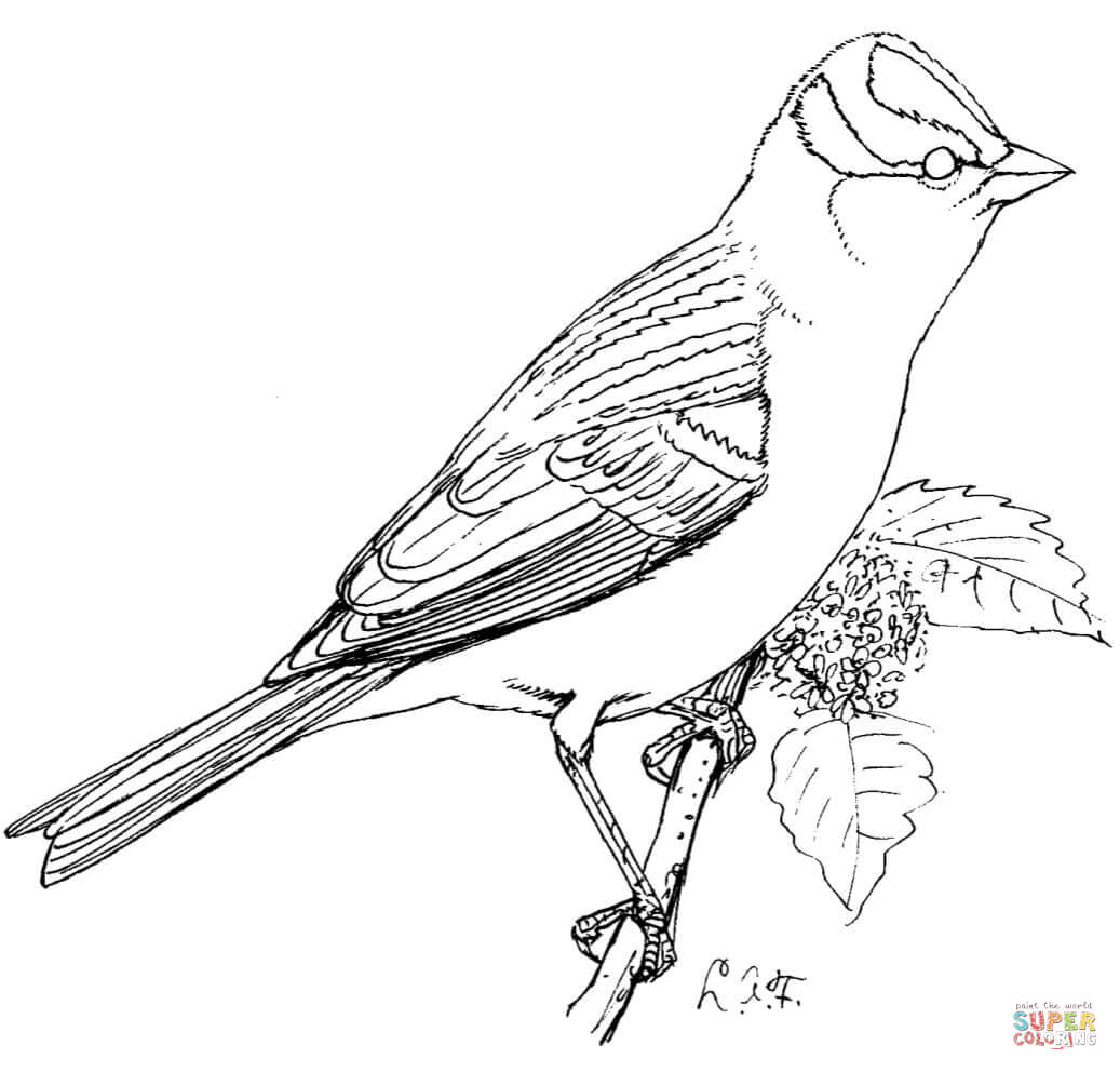 sparrow coloring pages sparrow coloring pages to download and print for free coloring pages sparrow