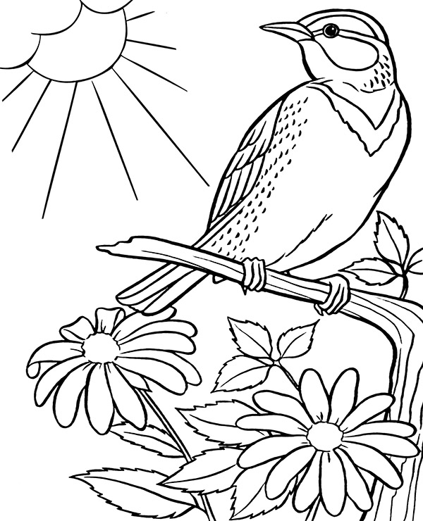 sparrow coloring pages sparrow coloring pages to download and print for free pages coloring sparrow