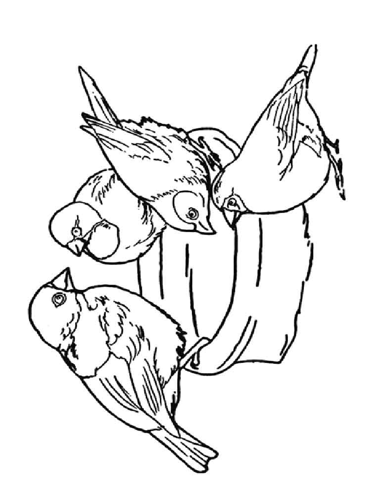sparrow coloring pages sparrow coloring pages to download and print for free sparrow pages coloring 1 1
