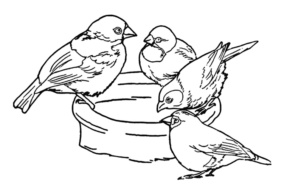 sparrow coloring pages sparrow sooty coloring pages print coloring 2019 sparrow pages coloring