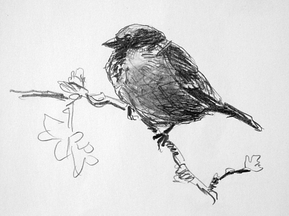 sparrow drawings a little sketch book house sparrow sketch sketchbook sparrow drawings
