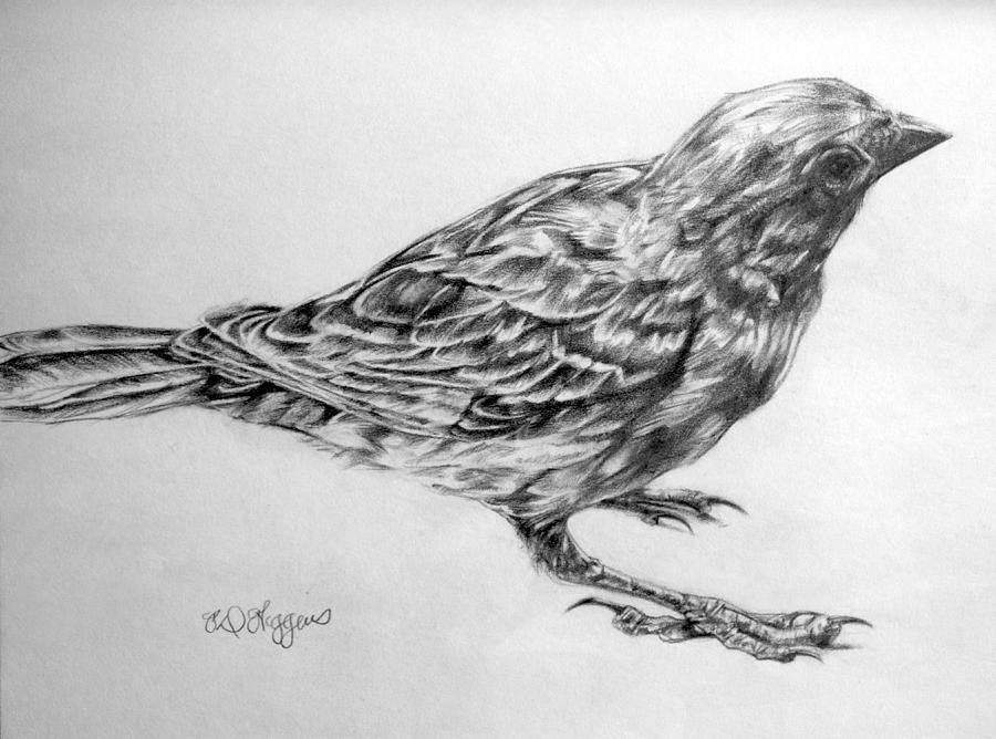 sparrow drawings flying sparrows on behance drawings sparrow