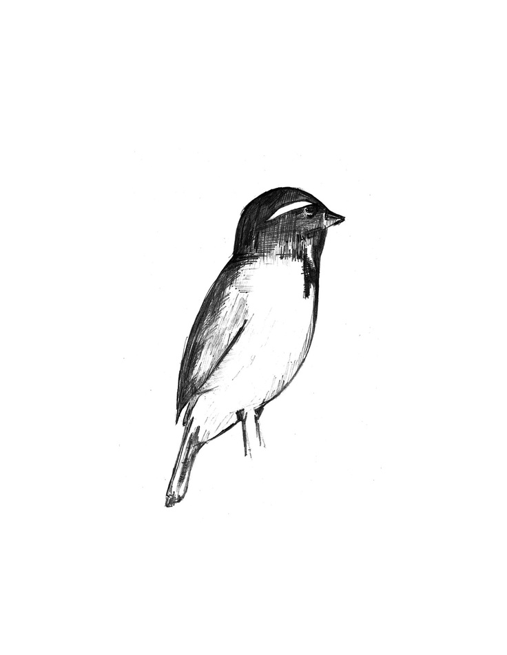 sparrow drawings free flying bird drawing download free clip art free drawings sparrow
