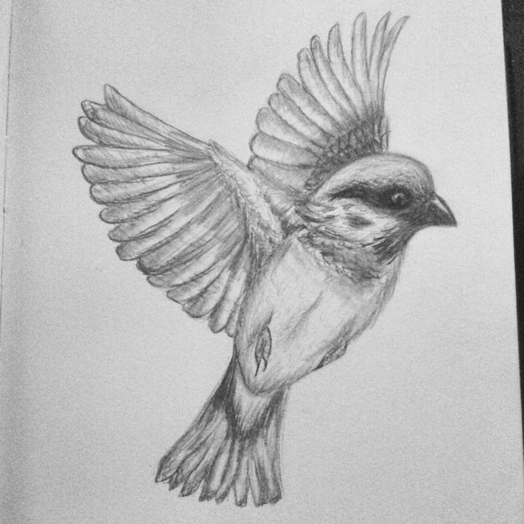 sparrow drawings how to draw a sparrow youtube sparrow drawings