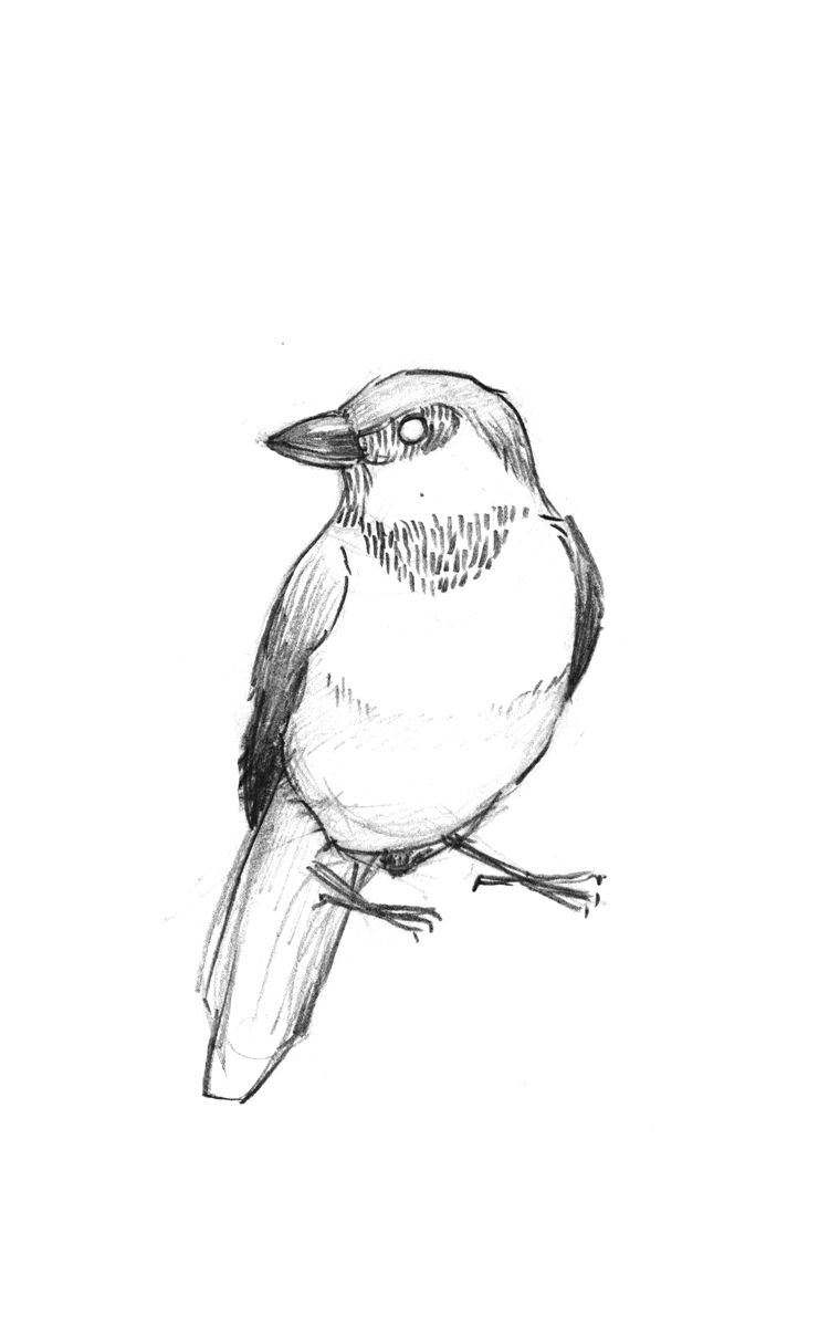 sparrow drawings sparrow drawing sketches art drawings drawing for sparrow drawings