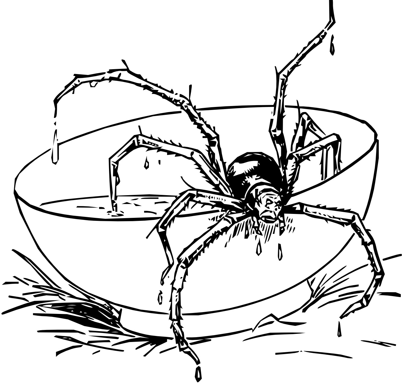 spider coloring page dangerous spider coloring page netart page spider coloring