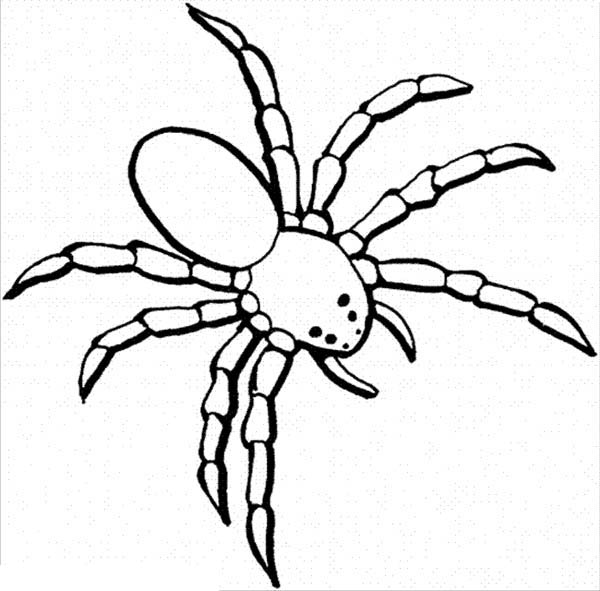 spider coloring page free printable spider coloring pages for kids coloring spider page