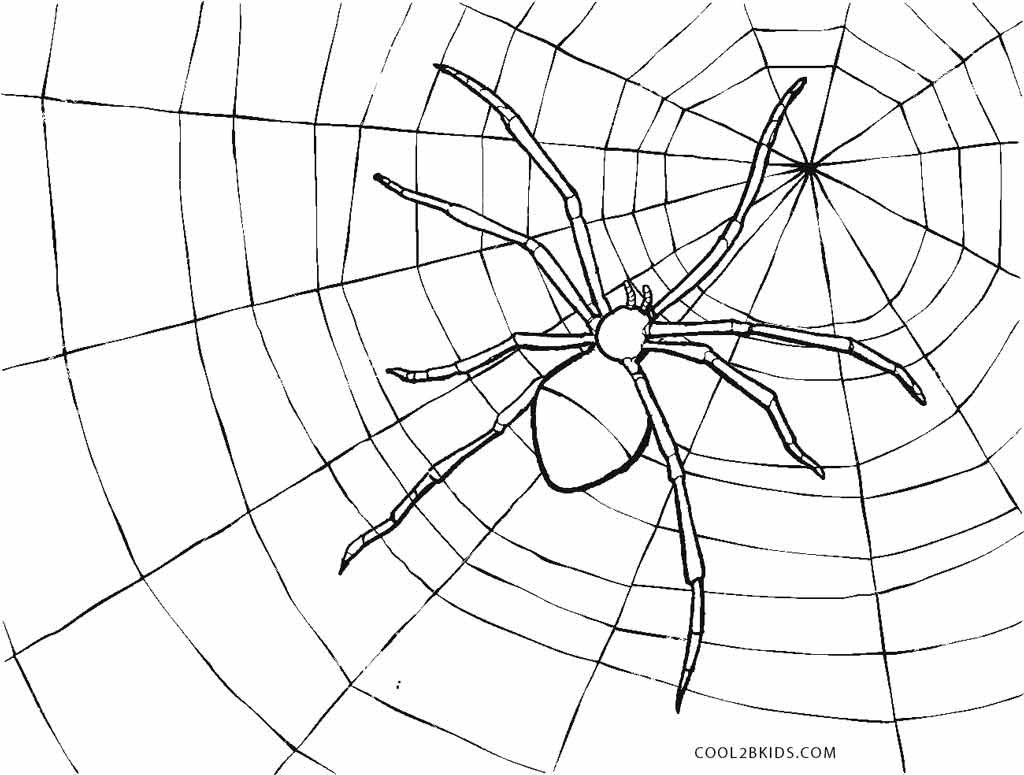 spider coloring page free printable spider coloring pages for kids coloring spider page 1 1